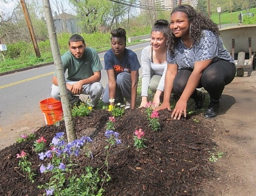 New Haven Independent: Javier's Tree Grows in Heights