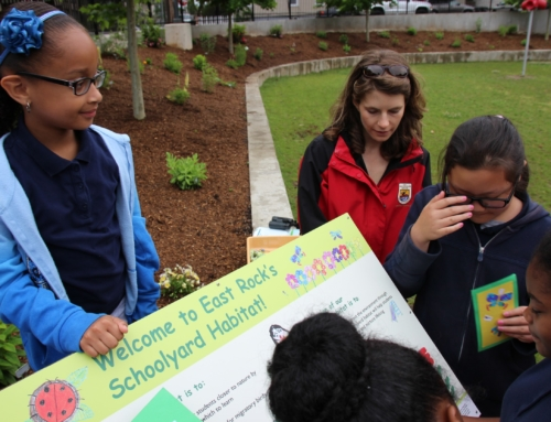 Bird Watching and Bug Catching: Common Ground and New Haven Public Schools Partner to Create Outdoor Learning Experiences
