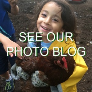 "A young boy holds a chicken and smiles. The words ""See our photo blog"" are written across the photo."