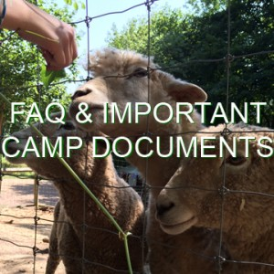 "A hand reaches out to offer knotweed to three eager sheep. The words ""FAQ and important camp documents"" are written across the photo."