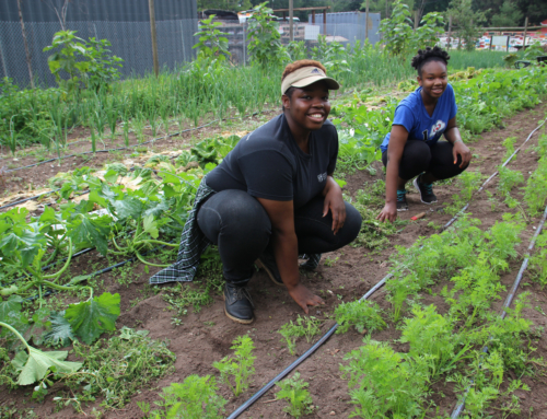 Urban Farm Internship Program For Summer 2016
