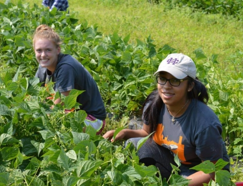 From Clark University: Ariel Vaughan, CG '13,  Shares Urban Agriculture's Impact on Young People