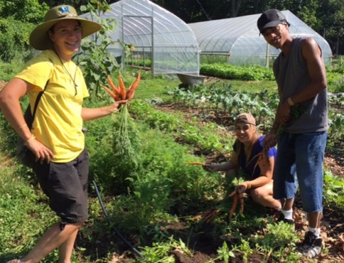 Now Accepting Applications for our Urban Farming Internship, 2017 Season