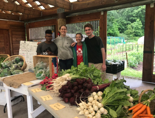 Now Accepting Applications for our Urban Farming Internship, 2018 Season