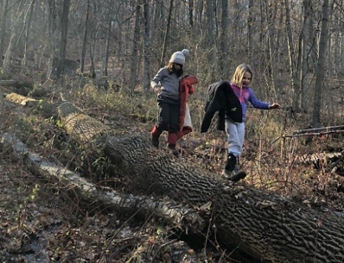 Common Ground is Seeking a Forest School Teacher in the NatureYear Program