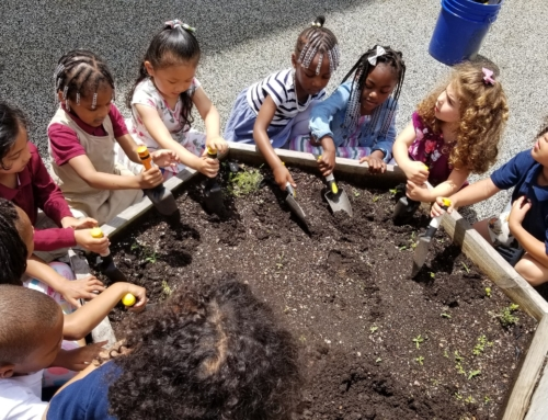 What do you do with a School Garden in the summer?