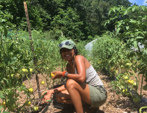 FILLED-Common Ground Is Now Accepting Applications for Our Urban Farming Internship