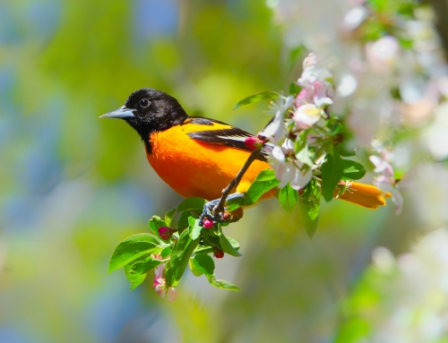 Nature Notes 5/17/21